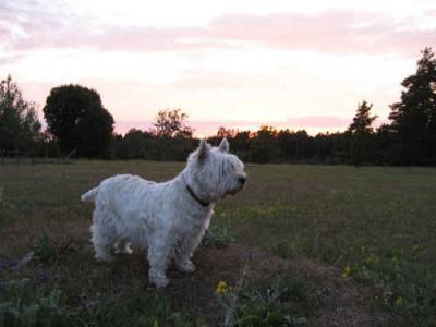 Ta med hunden till vårt vandrarhem